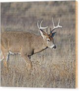 Whitetail Buck On The Move Wood Print