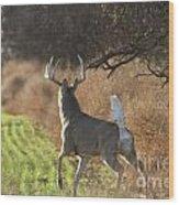 Whitetail Buck Rut Wood Print