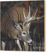 White-tailed Deer Antler Shadow Wood Print