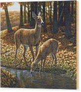 Whitetail Deer - Autumn Innocence 1 Wood Print