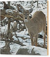 Whitetail Deer Doe In Snow Wood Print