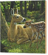 Whitetail Deer - First Spring Wood Print
