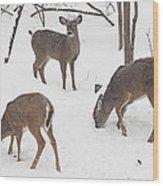 Whitetail Deer In Snowy Woods Wood Print