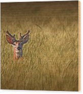 Whitetail Deer In Wheat Field Wood Print