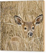 Whitetail In Weeds Wood Print