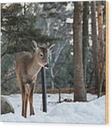 Whitetail In Woods Wood Print