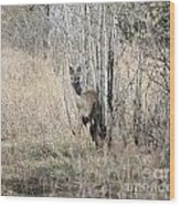 Whitetail Undercover Wood Print