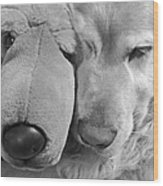 Who Has The Biggest Nose Golden Retriever Dog  Wood Print