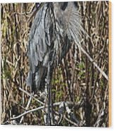 Who Is There - Great Blue Heron Wood Print