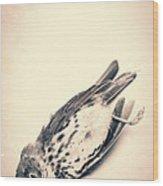 Who Killed Cock Robin Wood Print