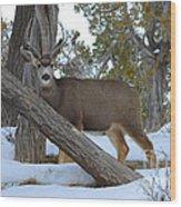 Who Me?  Oh Deer Wood Print