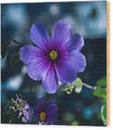 Who You Calling A Pansy? Wood Print