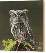 Whooo Goes There... Eastern Screech Owl  Wood Print