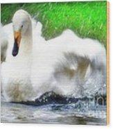 Whooper Swan Flutter Wood Print