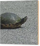 Why Did The Turtle Cross The Road Wood Print