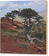 Wicked Tree And Red Rocks Wood Print by Roger Snyder