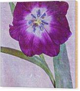 Wide Open Tulip Wood Print