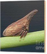 Widefooted Treehopper II Wood Print