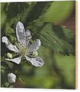 Wild Alabama Blackberry Blossom Wood Print