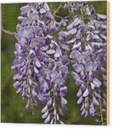 Wild Alabama Wisteria Frutescens Wildflowers Wood Print