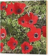 Wild Anemone Flowers In A Spring Field  Wood Print