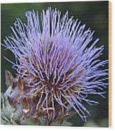 Wild Artichoke Flower Wood Print