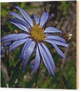 Wild Aster Flower Wood Print
