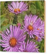 Wild Asters Wood Print