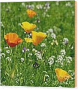 Poppies 3 - Wild At Heart Wood Print