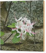 Wild Azalea Wood Print by Katie Spicuzza