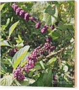Wild Beautyberry Bush Wood Print