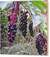 Wild Berry Wood Print