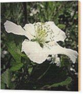 Wild Blackberry Blossom Wood Print