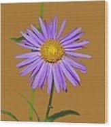 Wild Blue Aster Wood Print