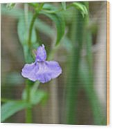 Wild Blue Orchid Wood Print
