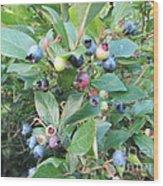 Wild Blueberry Bush Wood Print