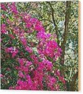 Wild Bougainvillea Wood Print