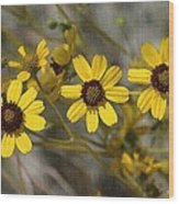 Wild Brittle Bush Flowers Wood Print
