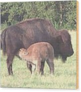 Wild Buffalo And Baby Wood Print by Rosalie Klidies