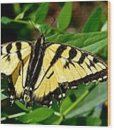 Wild Butterfly Wood Print