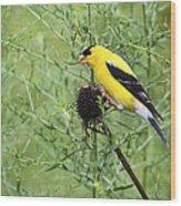 Wild Canary Bird Closeup Wood Print