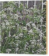 Wild Caraway And Old Fence Wood Print