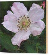 Wild Carolina Rose Wood Print