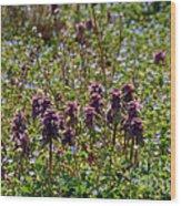 Wild Catnip Wood Print