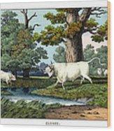 Wild Cattle Of Britain Wood Print