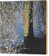 Wild Cherry Tree On The Sacramento River  Wood Print by Pamela Patch