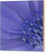 Wild Chicory Macro Wood Print