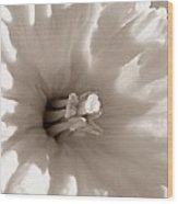Wild Daffodil Wood Print