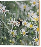 Wild Daisies And The Bumblebee Wood Print