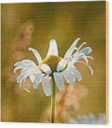 Wild Daisies Wood Print